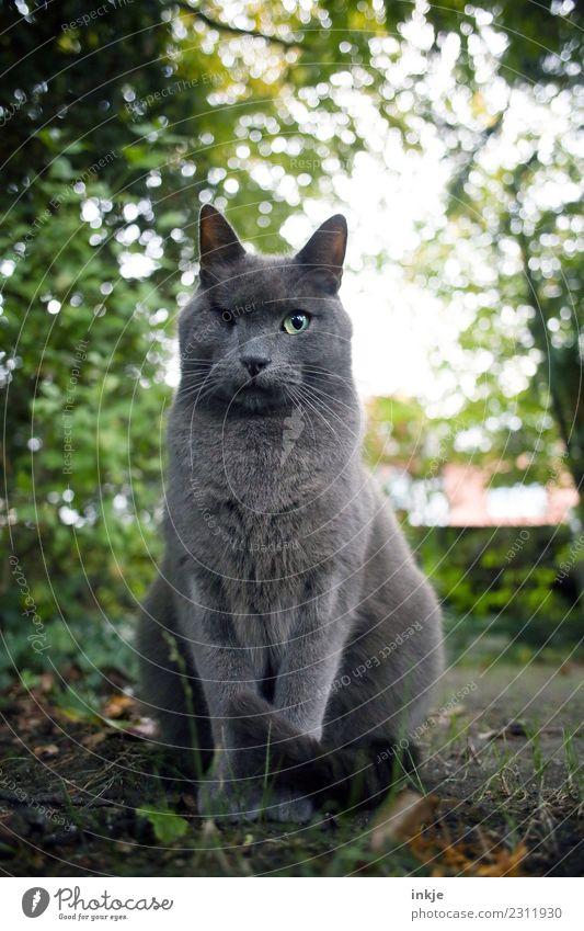 plemplem | der Kater Motte Umwelt Natur Frühling Sommer Herbst Garten Park Haustier Katze Tiergesicht Hauskatze 1 hocken Blick nerdig Gefühle Stimmung