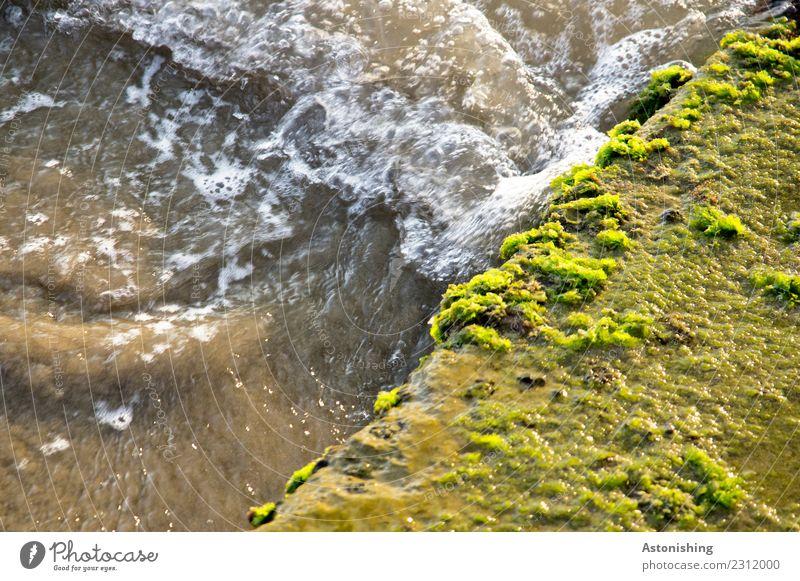 braunes Meer Natur Pflanze grün Wasser gelb Umwelt Stein dreckig nass Moos