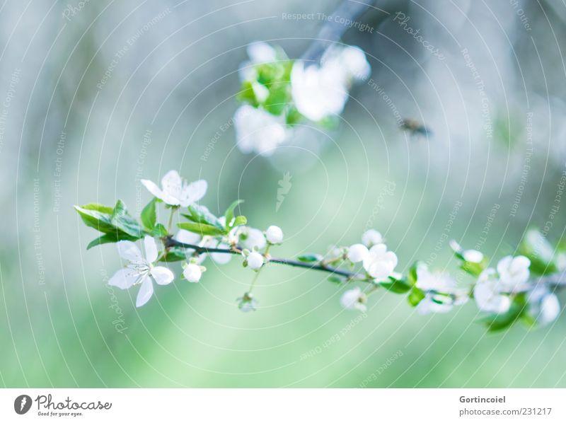Blütezeit Natur schön grün Blatt Blüte Frühling Umwelt Blühend Zweig Blütenknospen Blütenblatt Frühlingstag