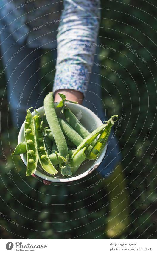 Frau Natur Pflanze Sommer grün Sonne Hand Blatt Erwachsene Garten Wachstum frisch Gemüse Bauernhof Ernte reif