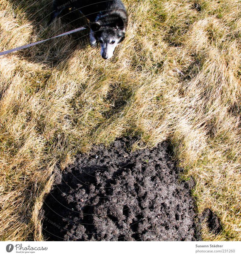 ich war's nicht Umwelt Urelemente Erde Dürre Pflanze Gras Sträucher Haustier Hund warten außergewöhnlich Natur Kot Haufen Hundeleine Farbfoto Außenaufnahme