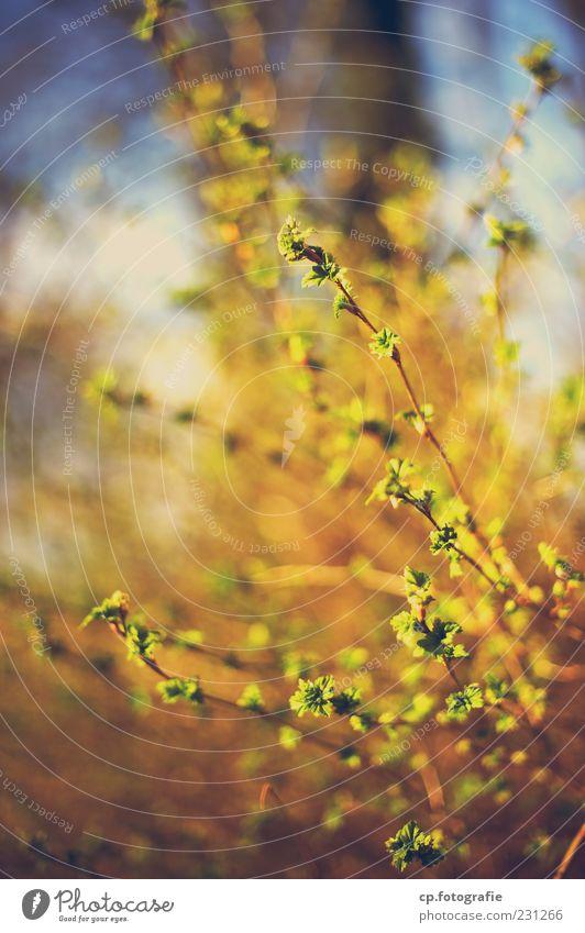 wildes treiben Natur Pflanze Blatt Wald Blüte Frühling Sträucher Blühend Schönes Wetter Blütenknospen Grünpflanze Zweige u. Äste