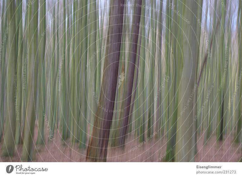 Waldimpression Natur Baum Pflanze Umwelt Landschaft Freiheit Erde ästhetisch Wachstum Perspektive Idylle geheimnisvoll Baumstamm vertikal Rügen
