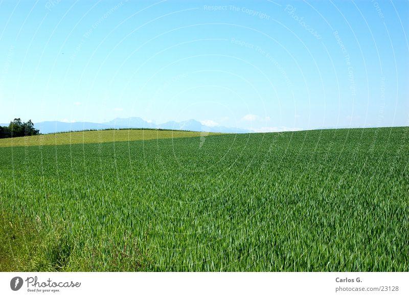 Allgäuer Grün Himmel grün Wiese Berge u. Gebirge Kuh Bayern schwäbisch