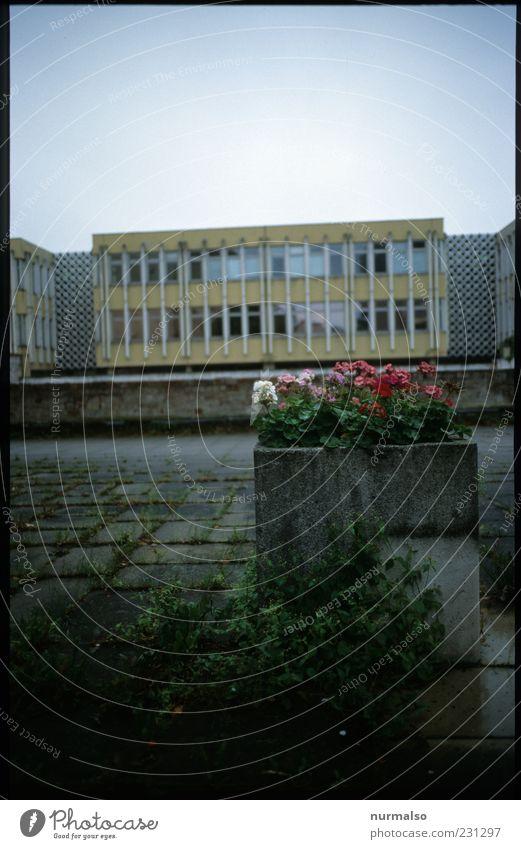 ein bisschen Schmuck muss sein Stadt schön Pflanze Blume Einsamkeit dunkel Umwelt Gebäude Fassade Beton Wachstum Lifestyle einfach Bauwerk Zeichen rein