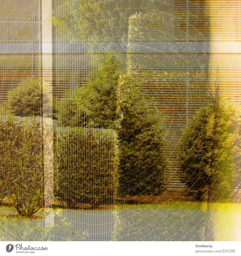 liniert mit rand Natur Pflanze Sommer Umwelt Fenster Gras Garten Fassade Klima Design modern außergewöhnlich Wandel & Veränderung Sträucher einzigartig trashig
