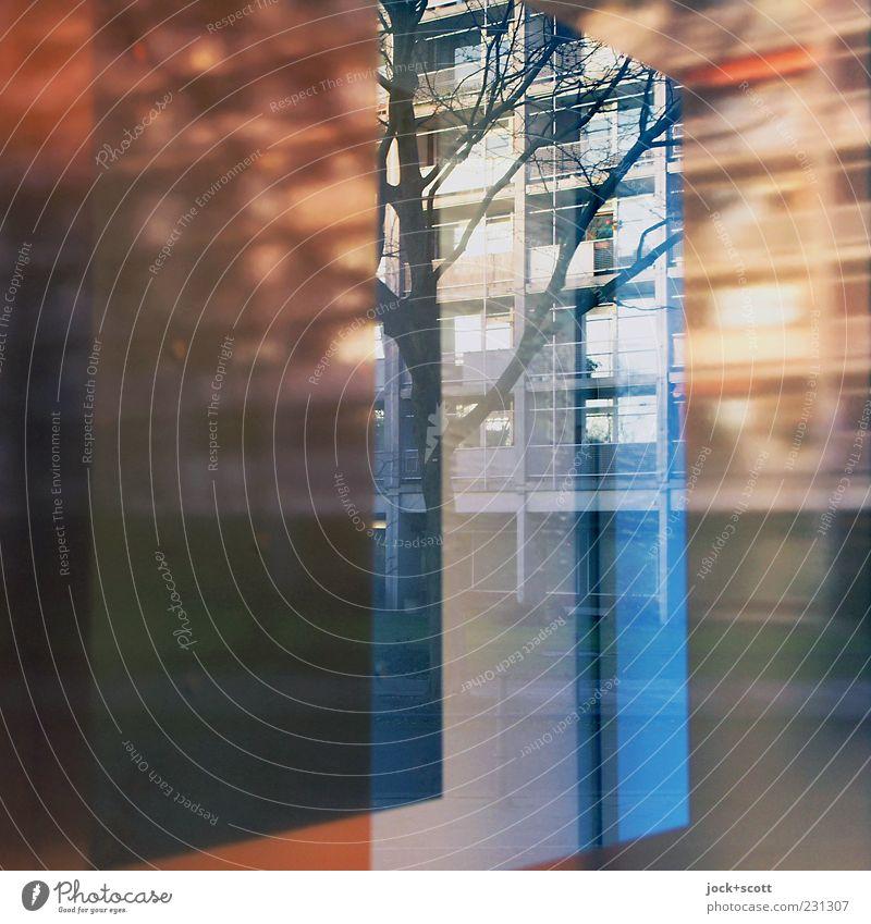 Hansaviertel Baum Tiergarten Architektur Stadthaus Fassade Fenster Glas Streifen eckig mehrfarbig zurückhalten ästhetisch Inspiration Kreativität modern