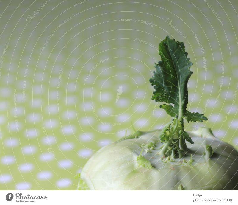 Vitaminbombe Lebensmittel Gemüse Kohlrabi Vegetarische Ernährung liegen frisch Gesundheit groß natürlich grün weiß ästhetisch einzigartig Blatt Farbfoto