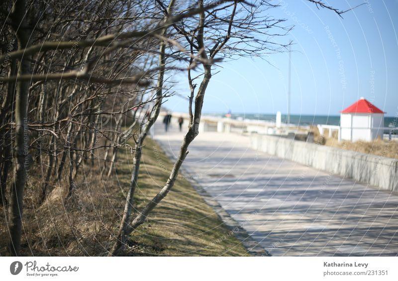 Promenade Sommer Sommerurlaub Meer Wasser Himmel Wolkenloser Himmel Sonne Schönes Wetter Baum Strand Ostsee blau rot weiß Einsamkeit Energie Erholung ruhig
