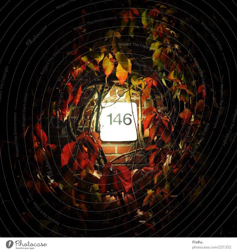 146 Pflanze Sträucher Blatt Mauer Wand schwarz weiß Lampe Licht Efeu Ranke Ziffern & Zahlen Hausnummer Nacht Beleuchtung scheinend hell Farbfoto Außenaufnahme