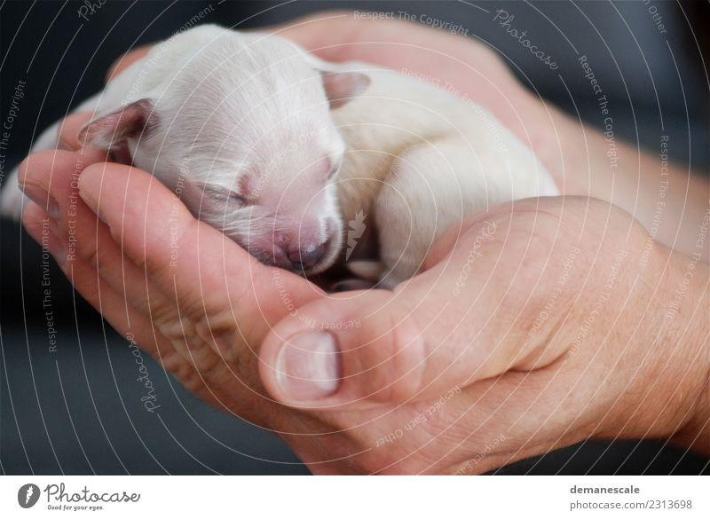 Hallo Welt Glück Raum Geburt Natur Tier Haustier Hund Fell Welpe Golden Retriever 1 atmen berühren Liebe liegen tragen braun gold rosa schwarz Gefühle Vertrauen