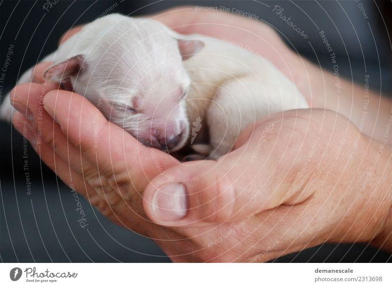 Hallo Welt Natur Hund Tier schwarz Leben Liebe Gefühle Glück braun rosa Raum liegen gold berühren Hoffnung Schutz