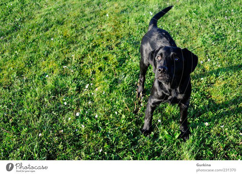 grün schwarz Tier Garten Hund warten Haustier