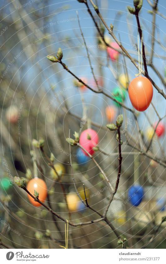 iStrauch Garten Dekoration & Verzierung Ostern Natur Pflanze Sträucher Holz Kunststoff hängen mehrfarbig Frühling Osterei Ei Zweige u. Äste Trieb Blattknospe