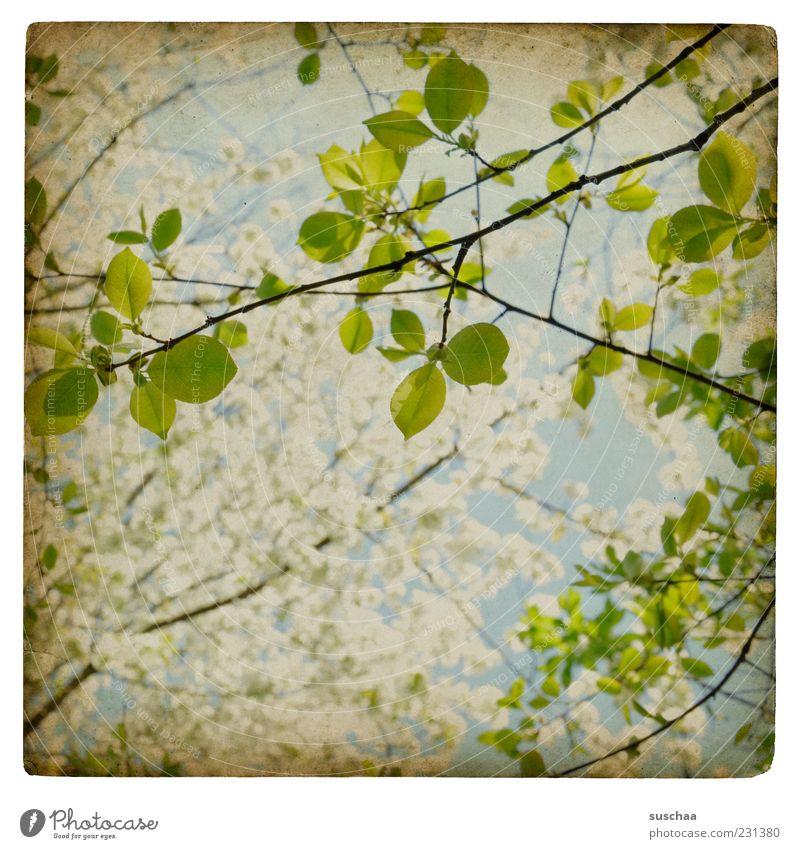 es grünt wieder ... Himmel Natur Blatt Umwelt Blüte Frühling Luft frisch Wachstum neu Hoffnung Ast Schönes Wetter Vorfreude Zweige u. Äste
