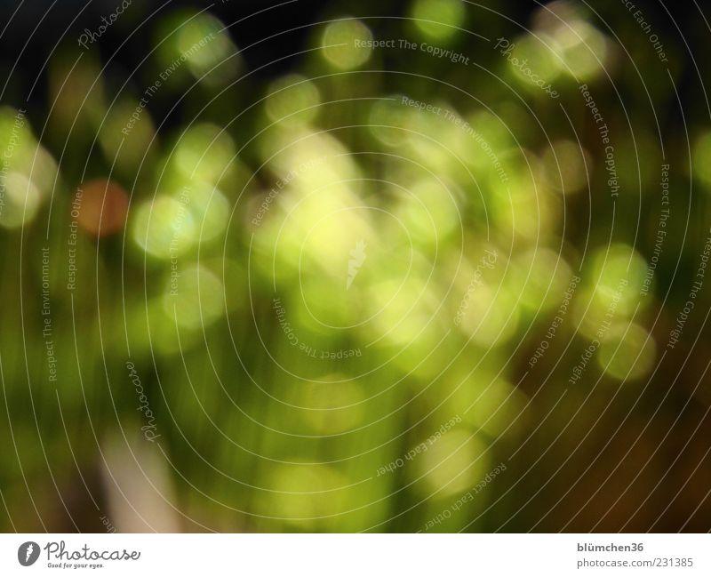 Das Experiment grün Pflanze Leben Hintergrundbild ästhetisch außergewöhnlich einzigartig bizarr Moos exotisch Inspiration Textfreiraum schemenhaft Frühlingsgefühle abstrakt Unschärfe