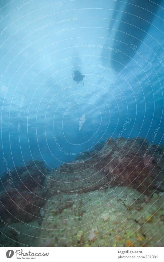 GOING DOWN QUICKLY tauchen Meer Mauritius Natur Wasserfahrzeug Wasseroberfläche Unterwasseraufnahme Farbfoto Ferien & Urlaub & Reisen Reisefotografie