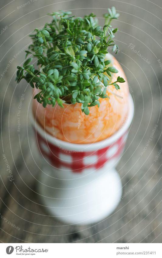 gesundes Osterei Lebensmittel Ernährung Bioprodukte Vegetarische Ernährung grün Kresse Wachstum Eierbecher Hühnerei Pflanze geschmackvoll Frühstück Unschärfe