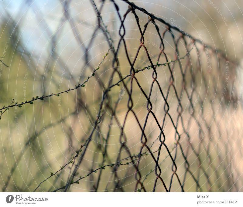 Maschedrohdzaun Pflanze Sträucher trist Zaun Draht Maschendrahtzaun Rost Farbfoto Außenaufnahme Nahaufnahme Muster Menschenleer Schwache Tiefenschärfe