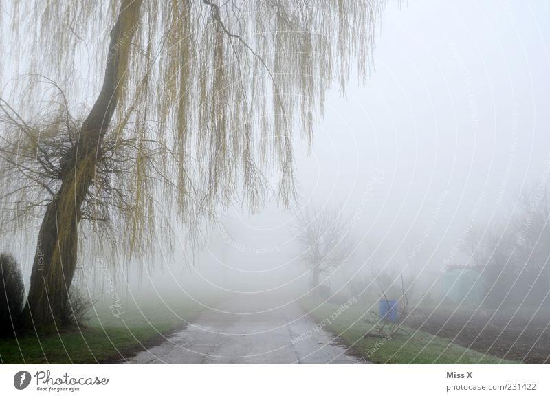 Weg ins Nichts Umwelt Natur Frühling Winter Klima Wetter schlechtes Wetter Nebel Eis Frost Baum Sträucher Menschenleer Wege & Pfade kalt spukhaft Weide