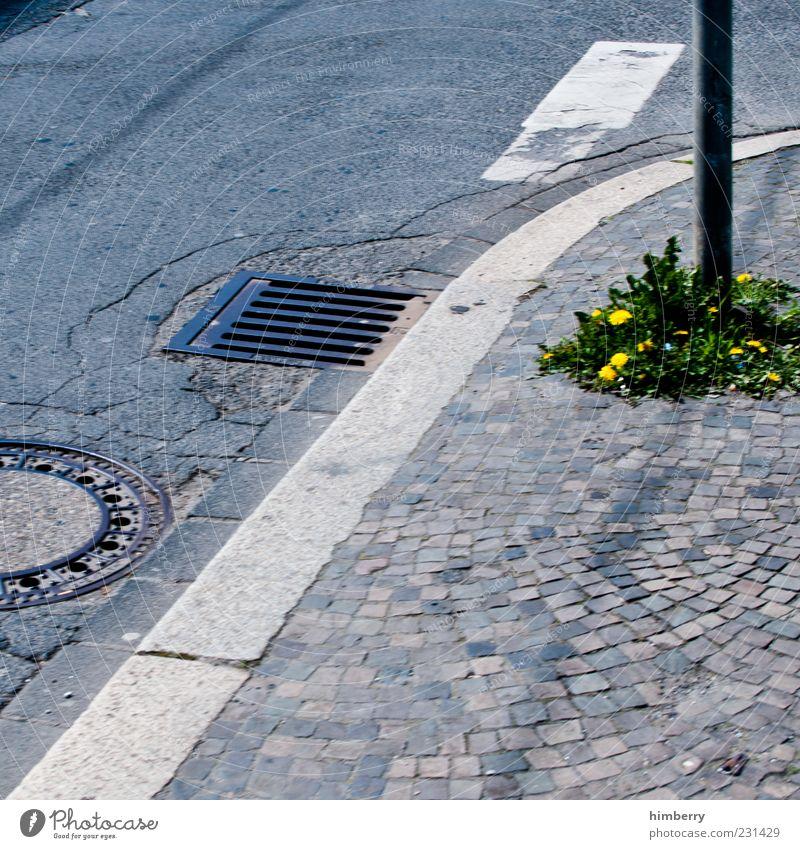Durchbruch Bündnis 90 Umwelt Natur Landschaft Pflanze Grünpflanze Wildpflanze Löwenzahn Stadt Verkehrswege Straße Straßenkreuzung Wege & Pfade bedrohlich