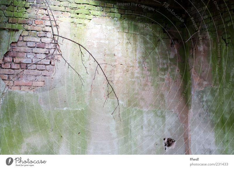 [FFM2011.1] Grünstich alt Wand Gebäude Mauer Stimmung Beleuchtung dreckig Wandel & Veränderung Ecke Vergänglichkeit Ast verfallen Backstein Verfall Ruine Zweig