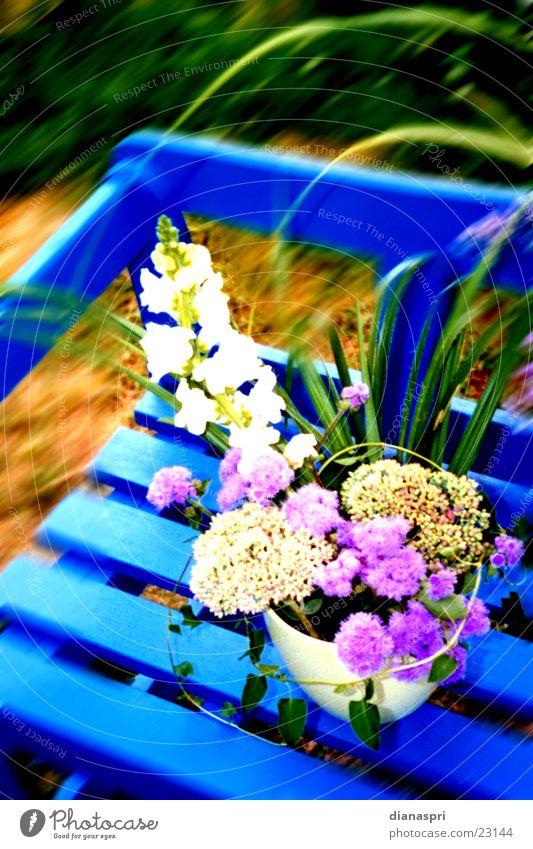 herbststrauss Blume blau Herbst Garten Stimmung Bank Blumenstrauß Vase Gesteck Gartenbank