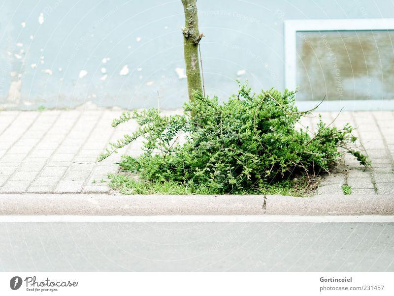 Busch Menschenleer Haus Mauer Wand Fassade Fenster Straße grün Bürgersteig Fußweg Sträucher Baumstamm Farbfoto Außenaufnahme Textfreiraum unten Tag Straßenrand