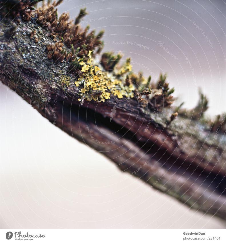 Mikrokosmos vor der Haustür Natur alt Pflanze Winter ruhig dunkel Umwelt Stimmung nass ästhetisch authentisch trist viele Ast nah diagonal