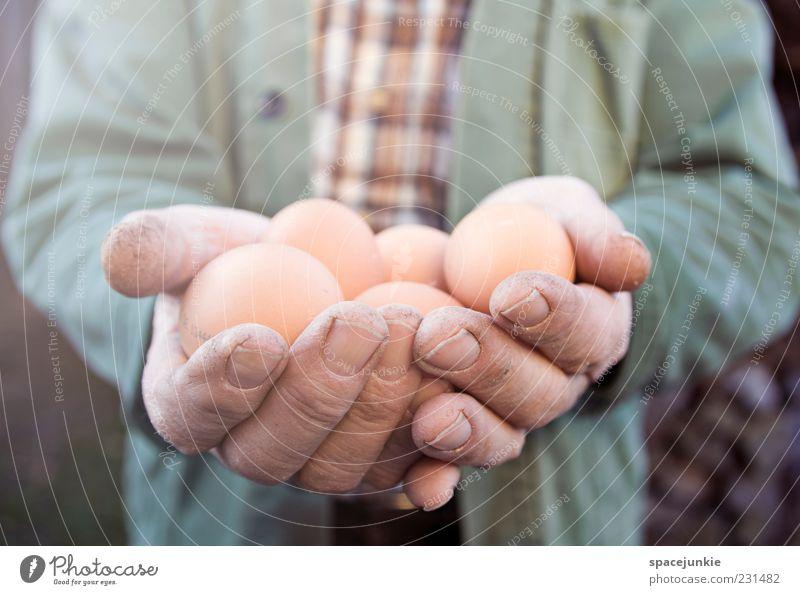 Ostereier Mann Hand ruhig Erwachsene gelb Senior braun Arbeit & Erwerbstätigkeit maskulin Finger festhalten stoppen Landwirtschaft Appetit & Hunger Ei
