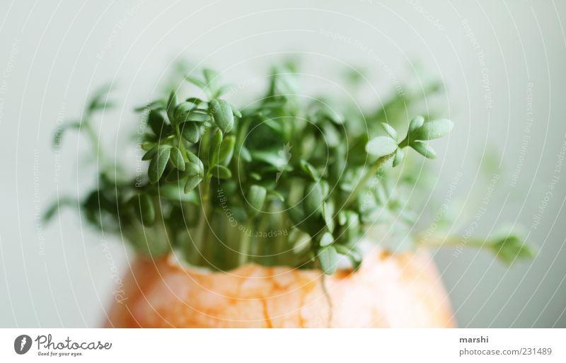 Überraschungsosterei Lebensmittel Ernährung Bioprodukte Vegetarische Ernährung Gesundheit lecker grün Wachstum Eierschale Osterei Kresse geschmackvoll