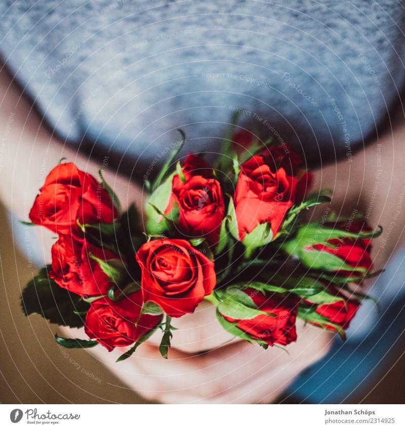 rote Rosen zum Valentinstag Freude Frau Erwachsene Freundschaft Hand Blume festhalten Liebe Gefühle Frühlingsgefühle Termin & Datum Verabredung Geschenk