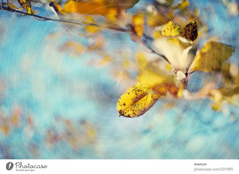 Hasel Natur schön Blatt gelb Herbst hell außergewöhnlich Wandel & Veränderung Kitsch Schönes Wetter türkis Herbstlaub herbstlich Herbstfärbung Zweige u. Äste