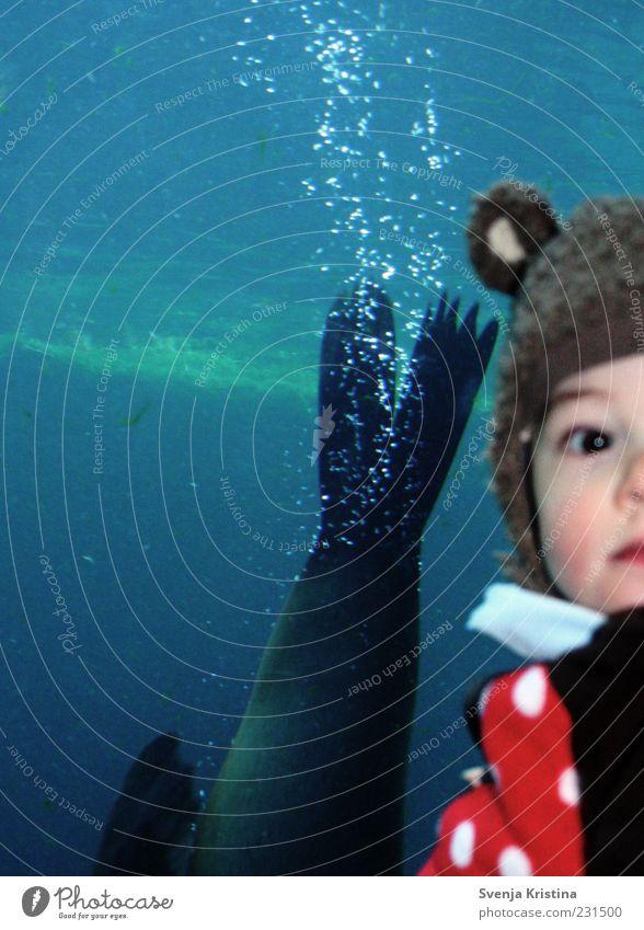 Seehund im Sturzflug Mensch Kind Natur blau Wasser Ferien & Urlaub & Reisen Freude Tier Junge Kindheit Freizeit & Hobby Schwimmen & Baden Ausflug ästhetisch