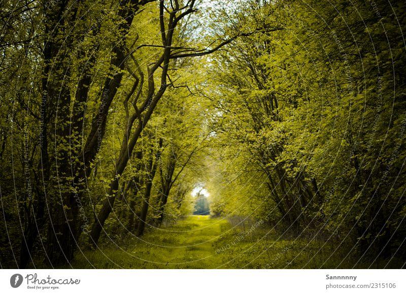 Idylle pur Natur Sommer Schönes Wetter Baum Sträucher Wald Zufriedenheit Frühlingsgefühle Kraft ruhig Einsamkeit Frieden Stimmung Umwelt Ferne Fußweg Paradies