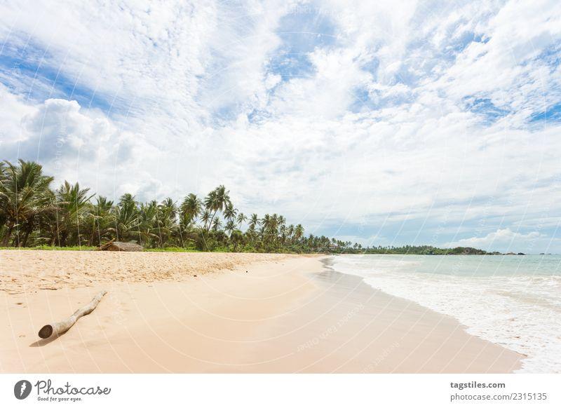 Ein Holzast am Strand von Balapitiya Asien fantastisch Bucht Ast ruhig Windstille beruhigend Küste verträumt Idylle erleuchten Landschaft Natur Meer Palme rein
