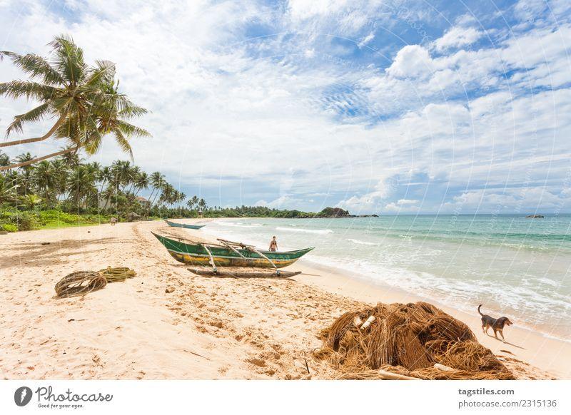 Frau Himmel Natur Ferien & Urlaub & Reisen Hund Pflanze Sommer Landschaft Meer Strand Küste Tourismus Idylle erleuchten Bucht Asien