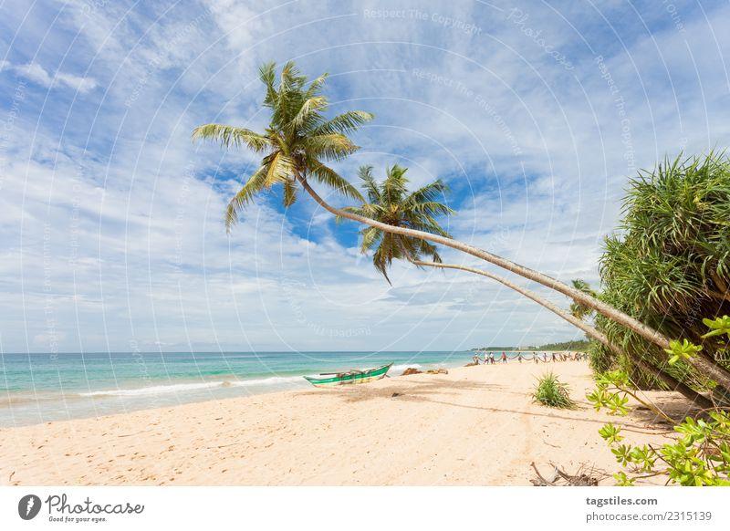 Natur Ferien & Urlaub & Reisen Mann Pflanze Sommer Landschaft Meer Strand Küste Tourismus Sand Asien Tradition Palme Kanu Fischereiwirtschaft