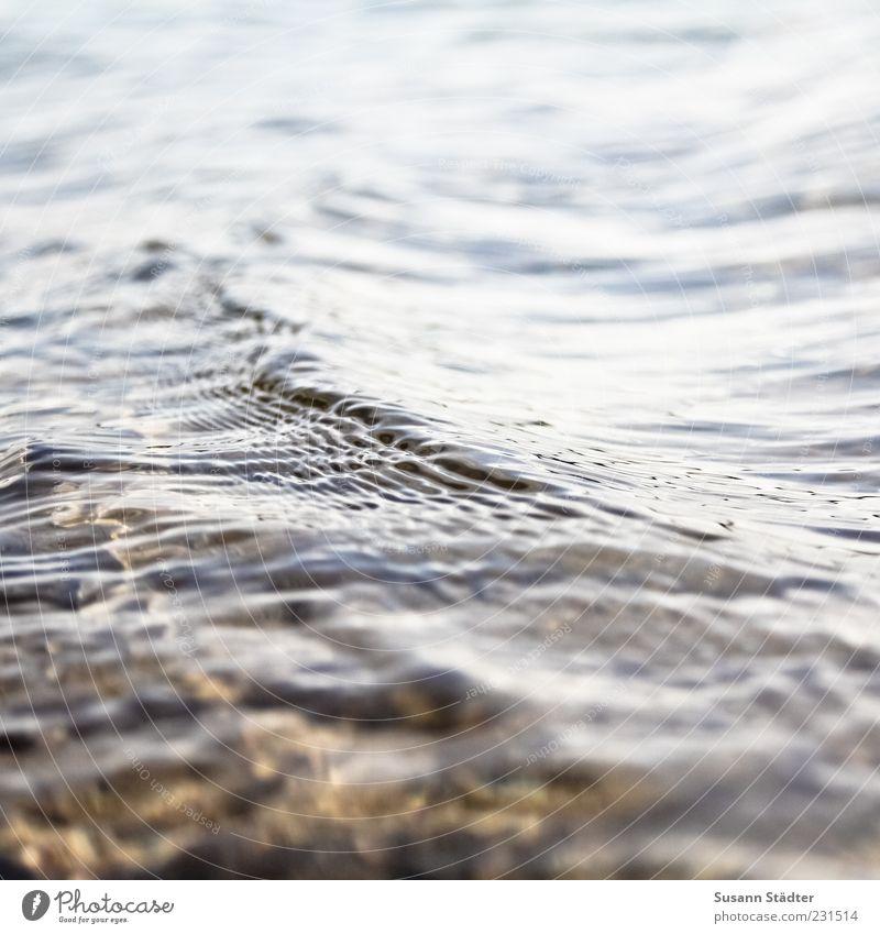 seicht Stein Wellen nass Fluss Seeufer Flussufer Bach fließen