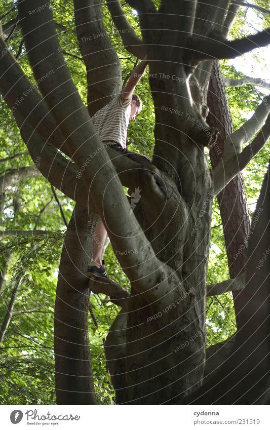 Von oben sieht man mehr Lifestyle Leben Freizeit & Hobby Ausflug Freiheit Mensch Junger Mann Jugendliche 18-30 Jahre Erwachsene Umwelt Natur Baum Wald Bewegung