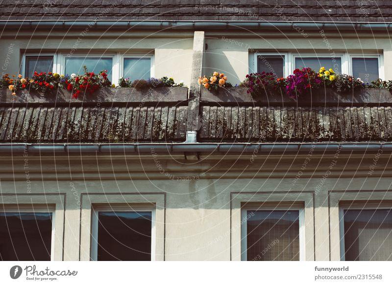 Balkon mit Blumen im Dachgeschoss Kleinstadt Stadt Haus Dachrinne Häusliches Leben oben Klischee Einsamkeit Mittelstand Symmetrie mehrfarbig Fenster Pelargonie