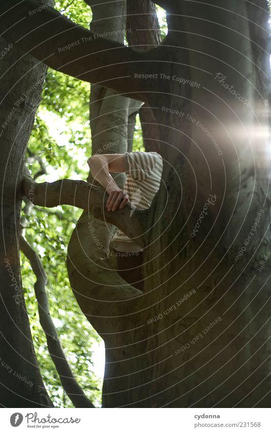 Jeder Handgriff sitzt Mensch Natur Baum Sommer Blatt Wald Umwelt Leben Freiheit Bewegung Freizeit & Hobby Arme Ausflug Lifestyle Ziel