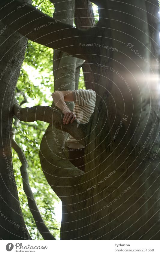 Jeder Handgriff sitzt Mensch Natur Hand Baum Sommer Blatt Wald Umwelt Leben Freiheit Bewegung Freizeit & Hobby Arme Ausflug Lifestyle Ziel