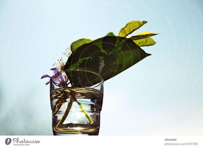 Frühlingsschnaps Pflanze Wasser Himmel Wolkenloser Himmel Sonnenlicht Schönes Wetter Blatt Blüte Frühblüher Glas frisch positiv grün Zufriedenheit Lebensfreude