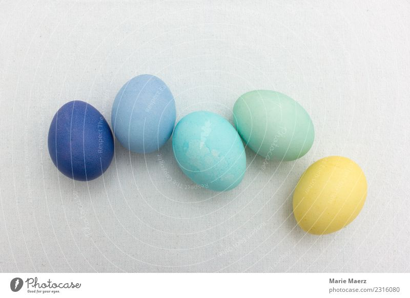 Gruppe Ostereier in Pastellfarben blau Farbe grün Essen gelb Lebensmittel Zusammensein frisch Ostern Farbenspiel Ei Pastellton färben