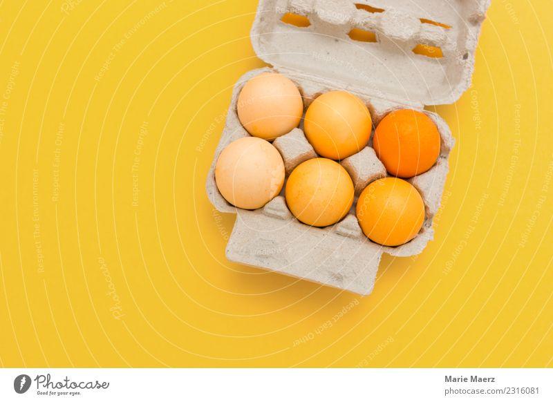 Gelb gefärbte Ostereier auf gelbem Hintergrund Farbe Freude Essen Stil Lebensmittel Feste & Feiern orange Zufriedenheit Ernährung ästhetisch frisch Fröhlichkeit