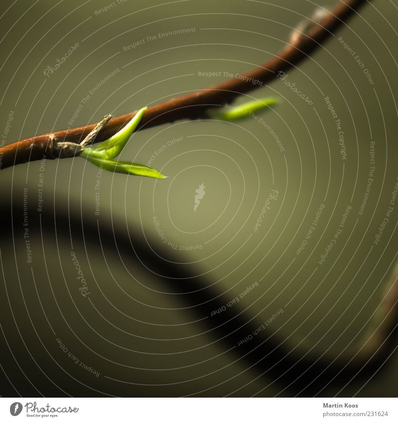Neuanfang Natur Pflanze grün Blatt Leben Frühling Stil Gesundheit Zeit braun Wachstum frisch ästhetisch Blühend Vergänglichkeit Wandel & Veränderung