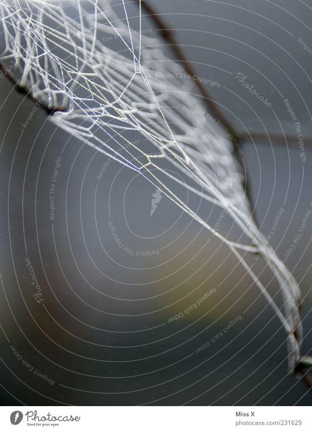 Netz Natur Spinne nass Netzwerk Spinnennetz Tau Farbfoto Gedeckte Farben Außenaufnahme Nahaufnahme Muster Menschenleer Hintergrund neutral Morgen