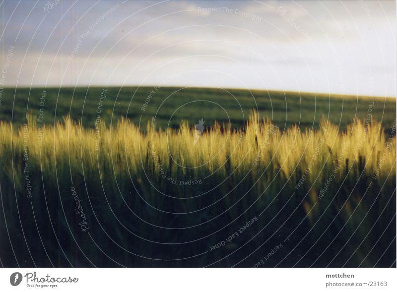 ein kornfeld Feld Hügel Abenddämmerung Licht Getreide Korn