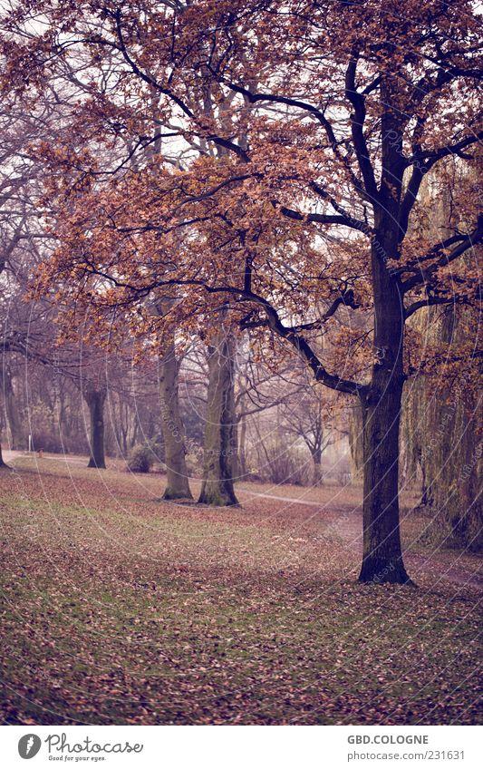 Herbstwald Natur Landschaft schlechtes Wetter Nebel Baum dunkel gruselig kalt natürlich trist braun Gefühle Stimmung Traurigkeit Einsamkeit nachhaltig